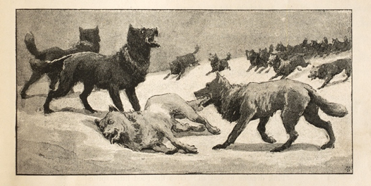 Everard Hopkins: Inset illustration of the wolf pack