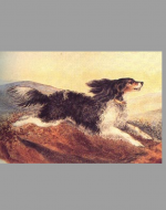 Colored painting of Flossy by Emily Brontë ca. 1843