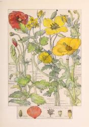 "H. Isabel Adams, ""Poppy Family"""