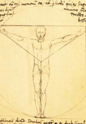 Giacomo Andrea's Vitruvian Man features a male figure enclosed in a circle and a square, but the body measurements are not as accurate as Vitruvian's original descriptions.